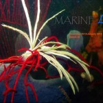 marinelife dec13 jan 14