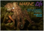Marine Life Apr May 2013