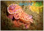 Marine Life Aug Sept 2013