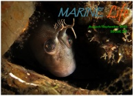 Marine Life MagazineOctober November 2013