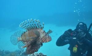 lionfish LHI